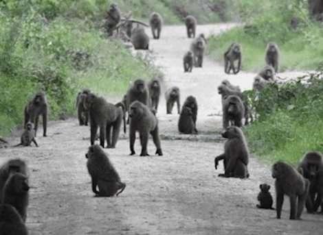 Ol Kinyei Conservancy-Nairobi National Park