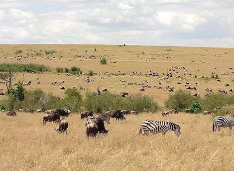 masai-mara 4