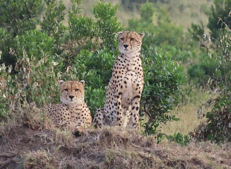 masai-mara 6